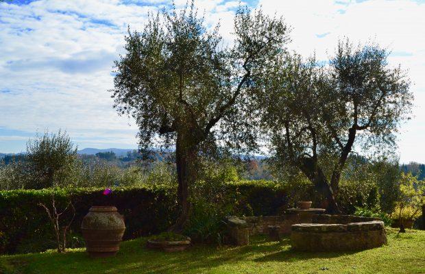 Quiet corner of the garden