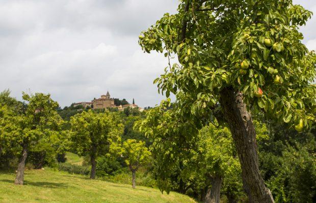 Villa La Cittadella: Fruit garden